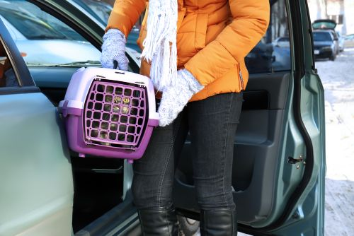 Cat Carrier for Car Travel