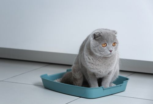 best low-tracking cat litter