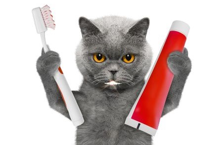 cat toothpaste for gingivitis